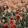 wildflowers_22